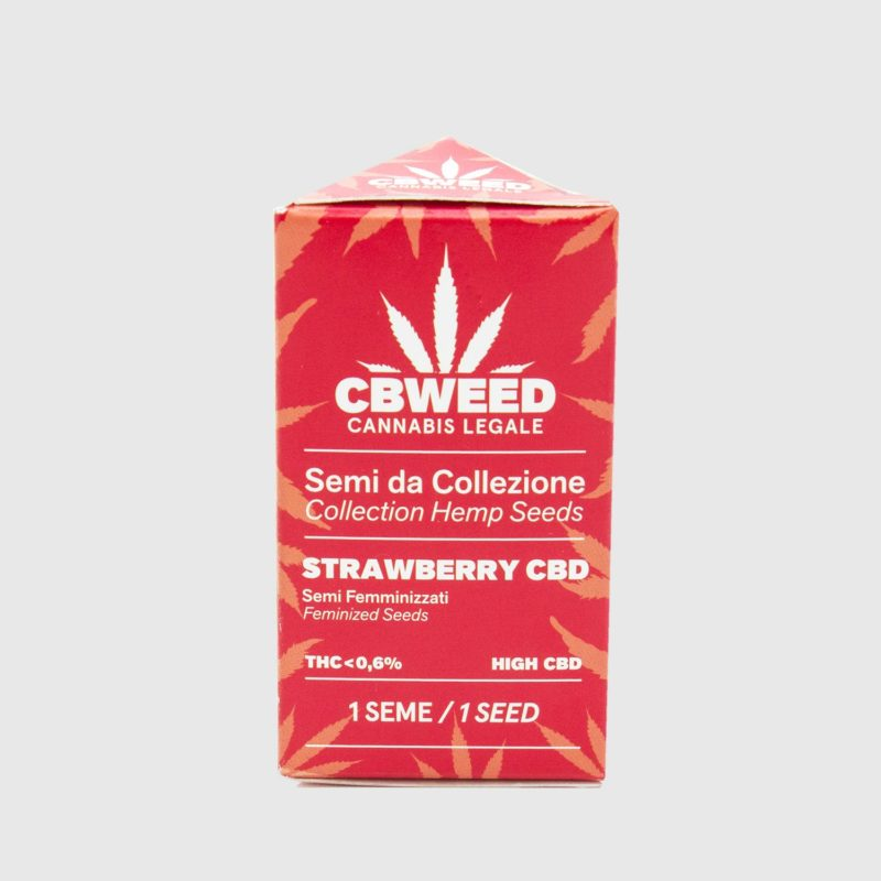 semillas-strawberry-cbd